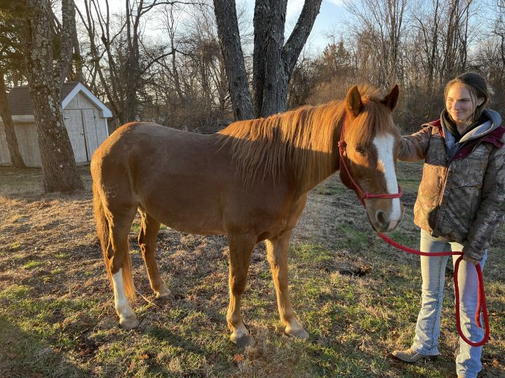 Waffles, an adopted Pony Mix in Riegelsville, PA