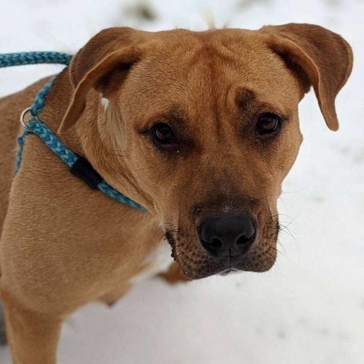 Mama Baker, an adoptable Mixed Breed in Bloomington, IL_image-2
