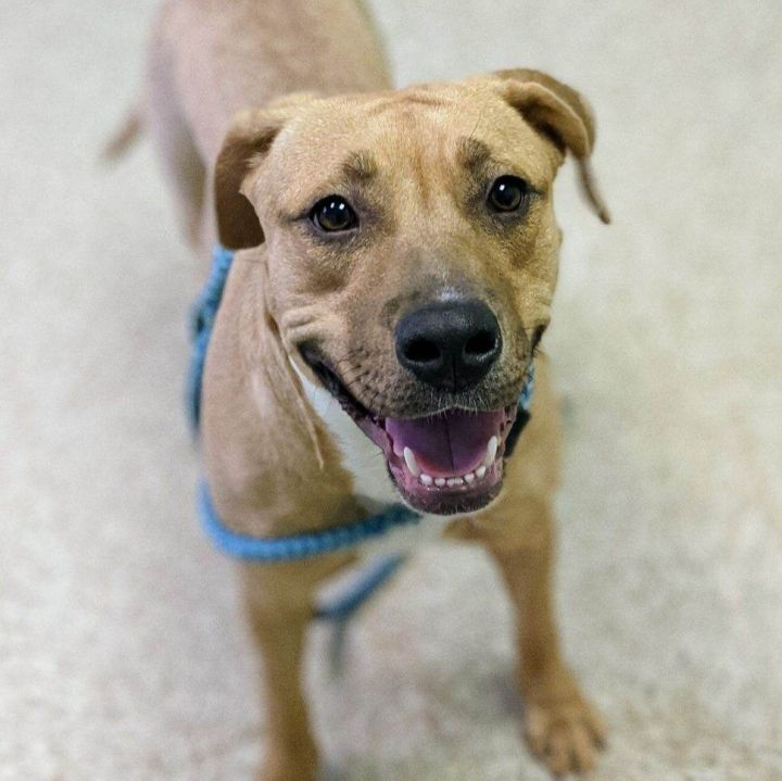Mama Baker, an adoptable Mixed Breed in Bloomington, IL_image-6