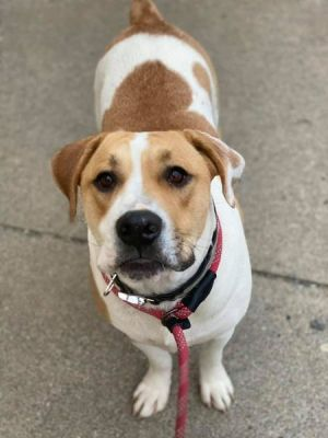 2 year old Chase To adopt call Lisa 914-469-6605