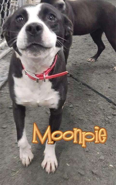 Moonpie 1