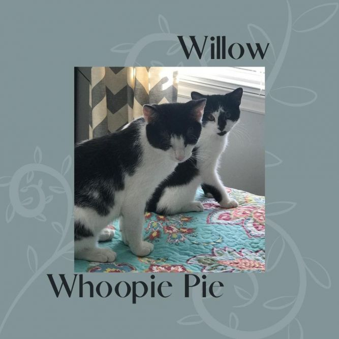 Whoopie Pie & Willow