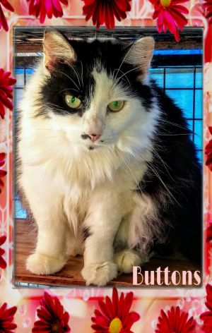 Meet ButtonsThis gorgeous lady has lived a long life shes 11-12 years old in good health Has so
