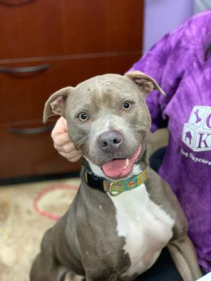 2 year old Apple To adopt call Lisa 914-469-6605