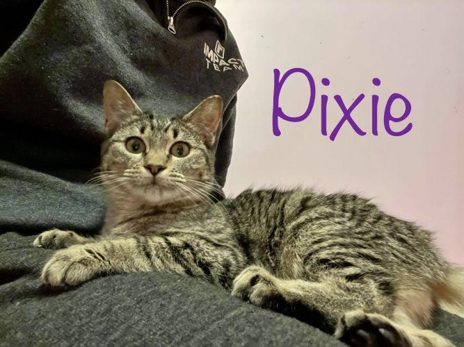 Pixie/Poppy