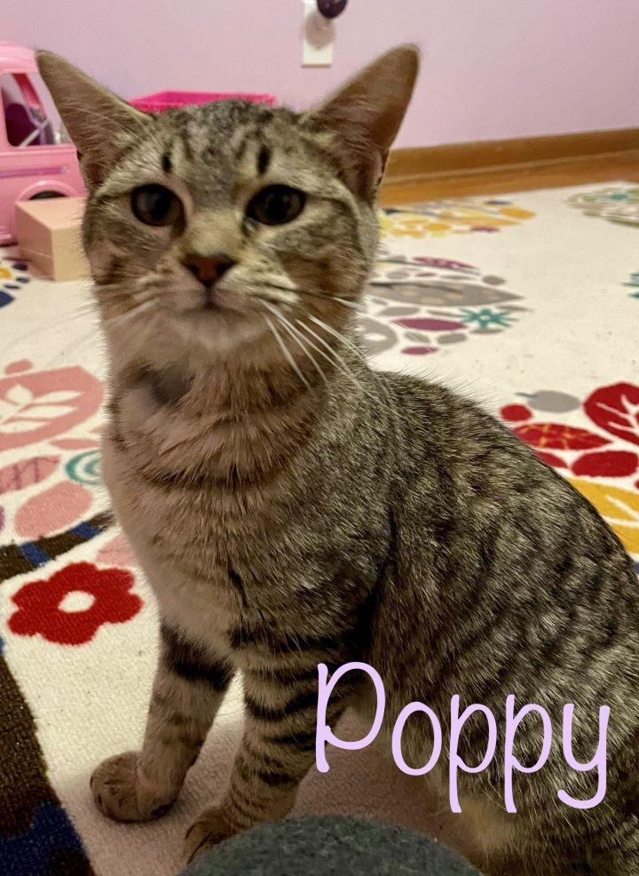 Pixie/Poppy 2