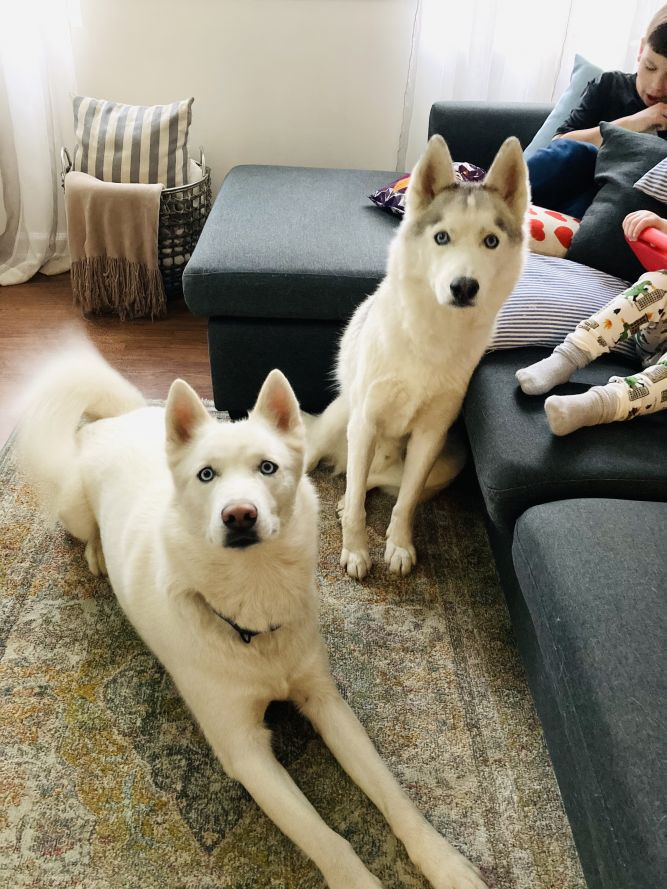 Zeus and Royal      BONDED PAIR