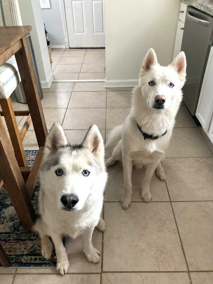Zeus and Royal      BONDED PAIR 6