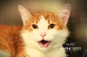 Nubby