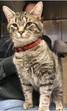Oscar -- BIG LAP CAT