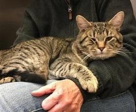 Oscar -- BIG LAP CAT 2