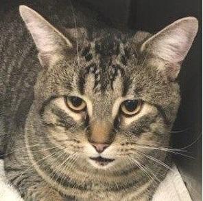 Oscar -- BIG LAP CAT 3