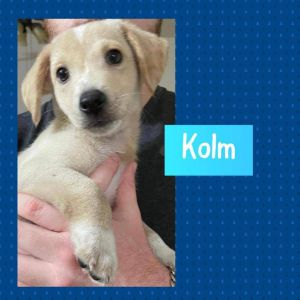 Oh Kolm is adorable and a sweet boy and looking for love of a family He is from