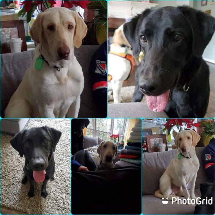 Baxter & Jackson (bonded pair) 2