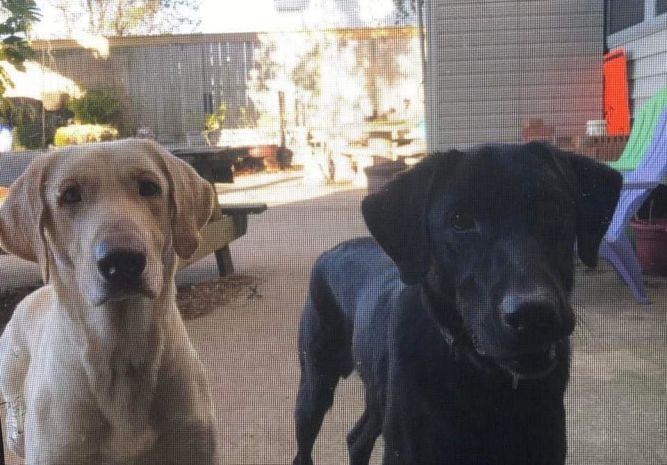 Baxter & Jackson (bonded pair)