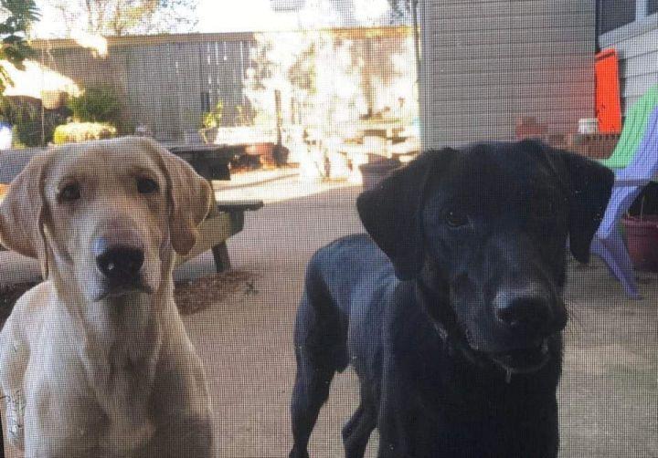 Baxter & Jackson (bonded pair) 1