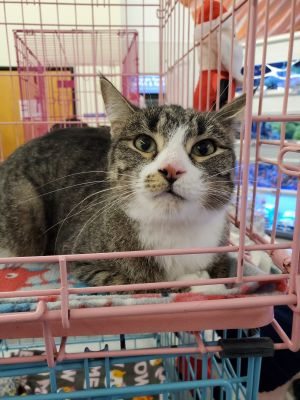 Nissy was saved by an independent rescuer and brought to our rescue as a young k