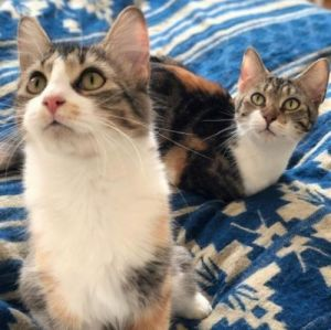 Nena & Coco