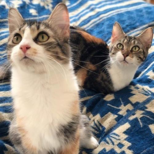 Nena & Coco 1