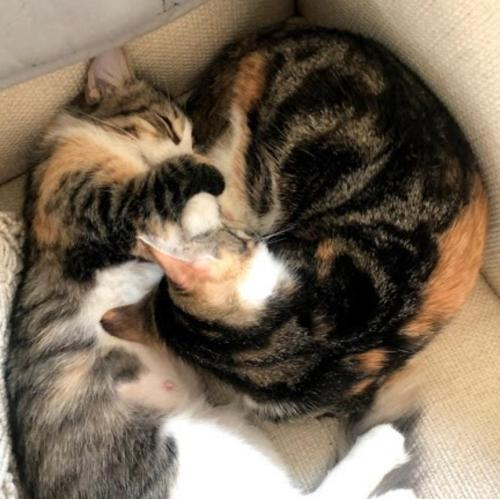 Nena & Coco 2