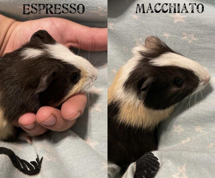 Espresso + Macchiato 1