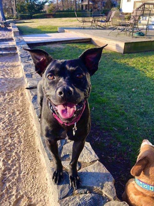 Holly - ADOPTED! 1