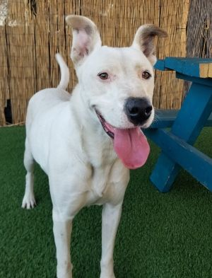 Hi there my names Jennifer and Im in search of a loving furr-ever home of my very own Im a