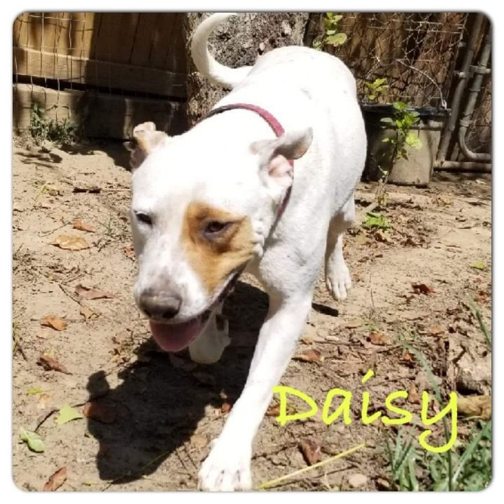 Daisy, an adoptable Mixed Breed in Tunica, MS_image-1