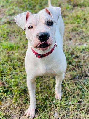 8 month old Oscar To adopt call Lisa 914-469-6605