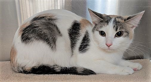 ADOPTED  Lucy (Downers Grove) 1