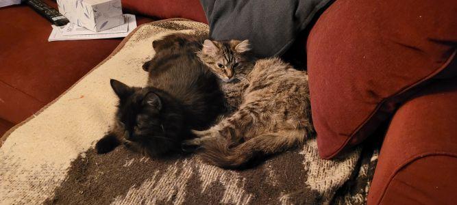 Sariah & Selena (Bonded Pair)