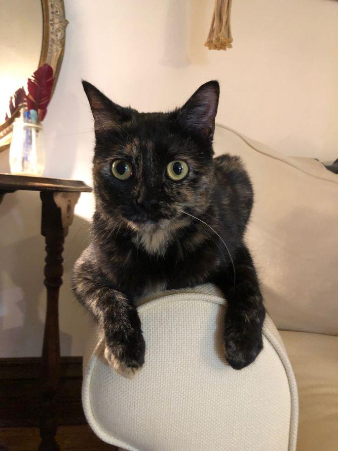 Emmie - Pending Adoption