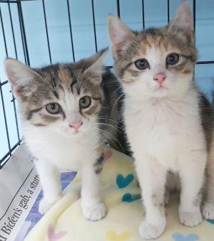 Arista and Athena ( bonded pair)