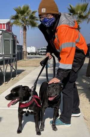 To meet GROVER  STEWIE please contact adoptionsstartrescueorg ROCCO is 10-years old and SAILOR is