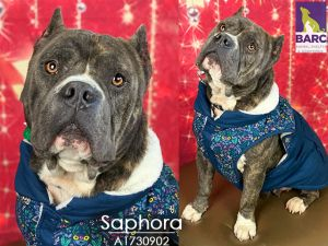Meet Saphora Im a super sweet girl who wants to be wherever you are I love chilling in the house