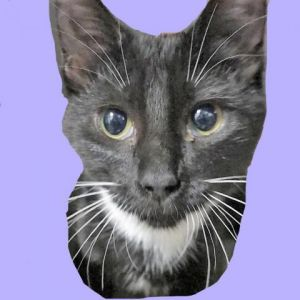 I was surrendered by my owner due to - Boo will be happier in a home where she is the
