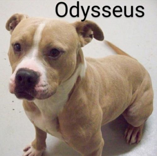 Odysseus 1