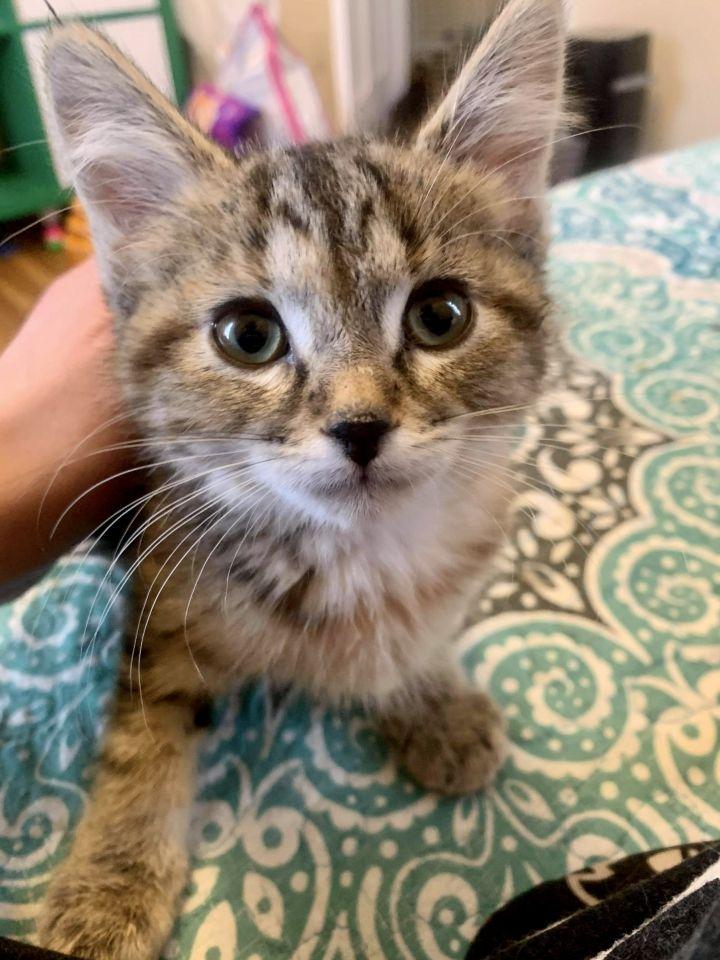 Ellie & Rusty (Bonded Pair) - Pending Adoption 3