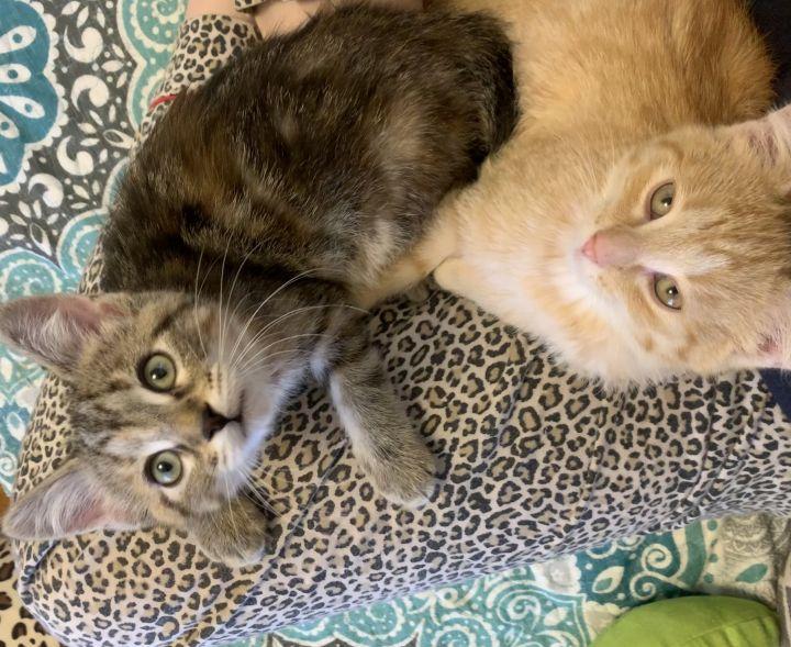 Ellie & Rusty (Bonded Pair) - Pending Adoption 4