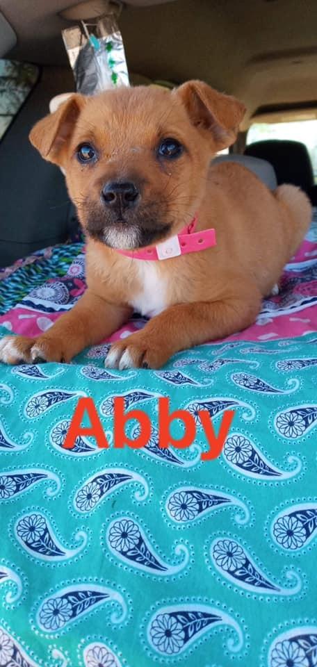 Li'l Abby (TX)