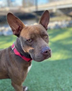 TO APPLY GO TO wwwLuckyDogRefugecom Meet Tater Tot This 1 year old smaller pit mix is as sweet
