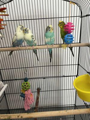 Mando, Grogu, Cara, and Boba