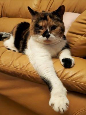 ?bust=1611502000&width=300 - Adopt a Cat