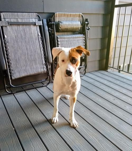 Conor, an adopted Mixed Breed in Alexandria, VA_image-1