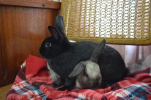Casper and Eek are a hilarious duo of bonded juvenile brothers They have recent