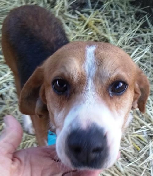 Baxter *Adopt or Foster* 1
