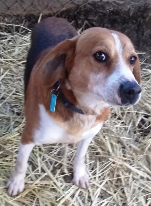 Baxter *Adopt or Foster* 2