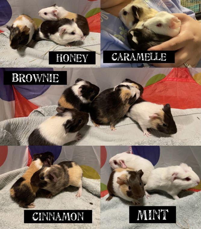 16 BABY PIGGIES