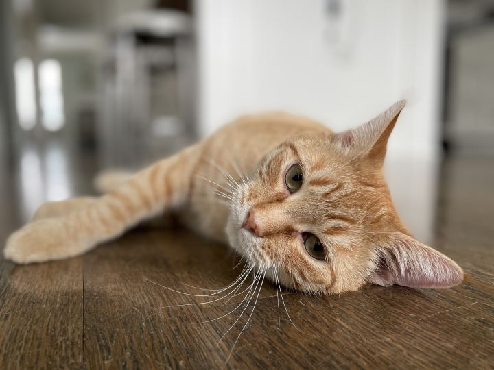 Garfield - Not Currently Accepting New Applications (Waitlist Only) 3