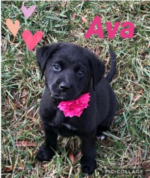 Ava - ADOPTED!!